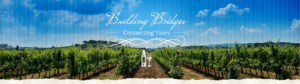 Building Bridges Connecting Vines
